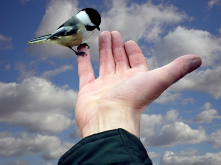 DSC00905_X_BirdHand_Extract_Thumb[1]