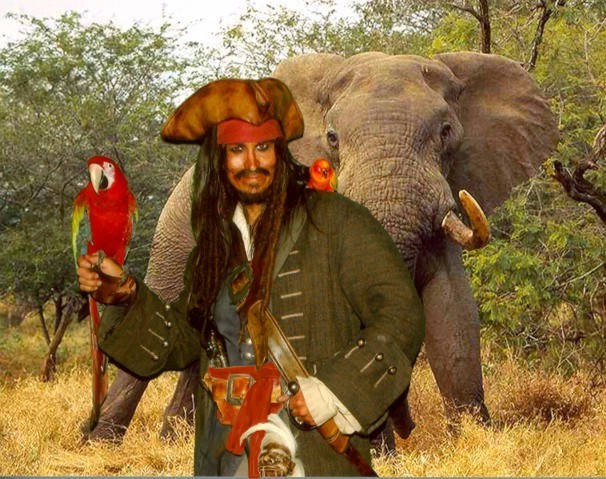 Parrot-jac-pirate-entertainer-africa-1md