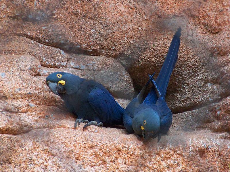 Learn's Macaws Rio de Janerio Zoo