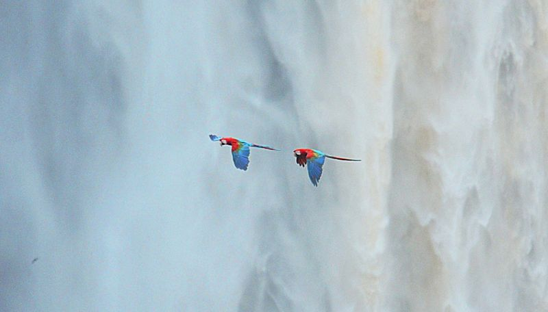 Macaws-falls-4-cropped