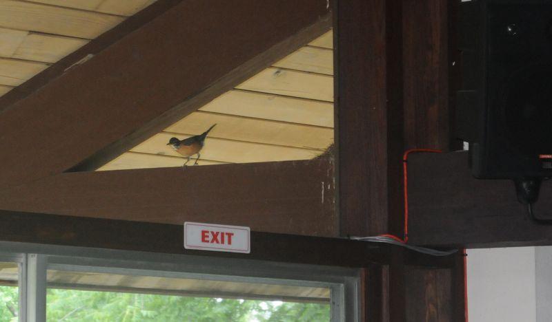 Robin's Nest CUC